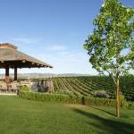 Vineyard Deck